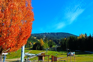 Leaves falling at the base of Blackcomb in Whistler